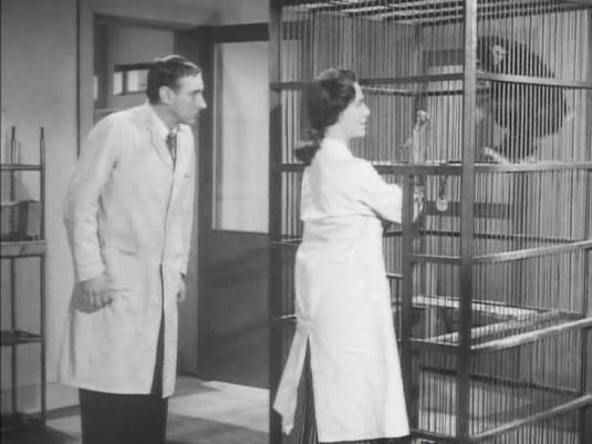 Suspect 1960 - 1 Lucy defends Arthur from mischievous chimp Phillips
